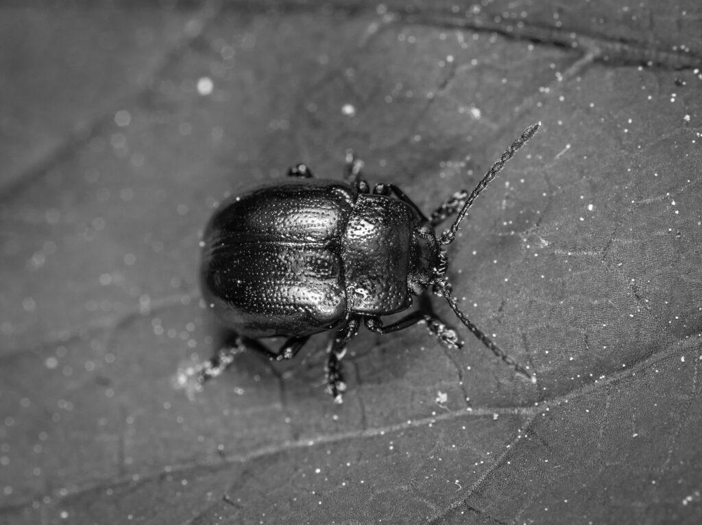 12.El Amanecer De Los Escarabajos